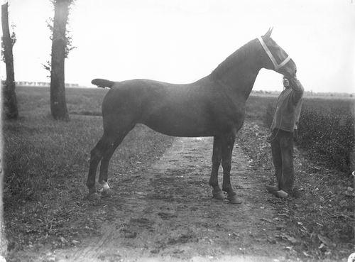 Bulk Cornelis 1885 19__ Paard Bana 02