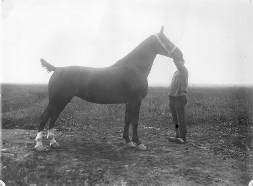 Bulk Cornelis 1885 19__ Paard Barones