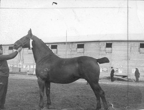 Bulk Cornelis 1885 19__ Paard Betsie 02 Moeder v Labda