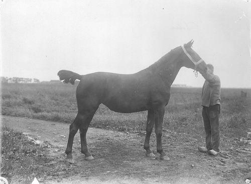 Bulk Cornelis 1885 19__ Paard Delia