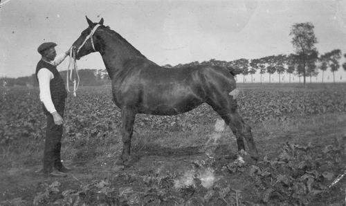 Bulk Cornelis 1885 19__ Paard Gusta 01