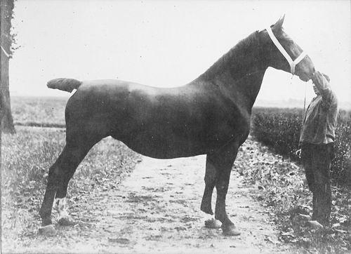 Bulk Cornelis 1885 19__ Paard Labda_Exp