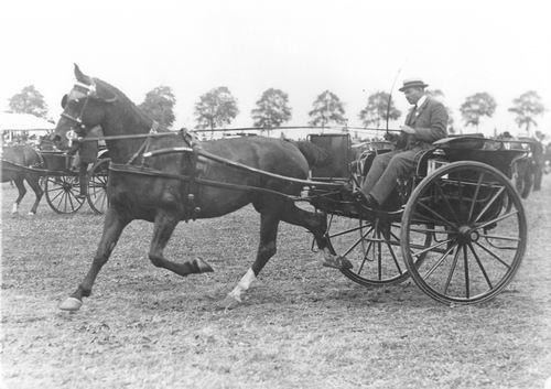Bulk Cornelis 1885 19__ op Concours met Paard Barones_5