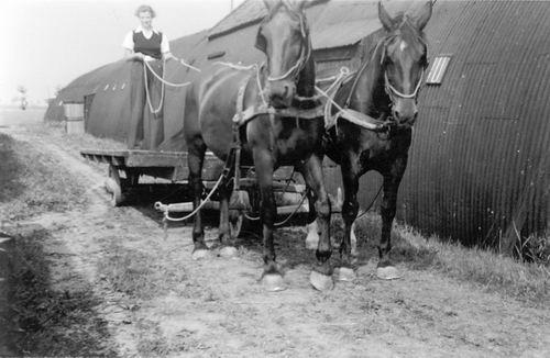Bulk Grietje 1920 19__ ment Paarden voor Boerenwagen