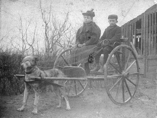 Captijn Lena 1868 19__ op Hondenkar met Oom Jan