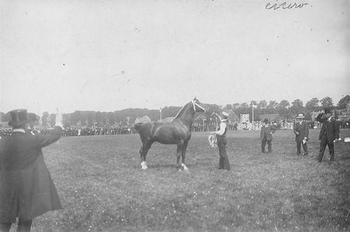 Concours Hippique 1909 met Cicero