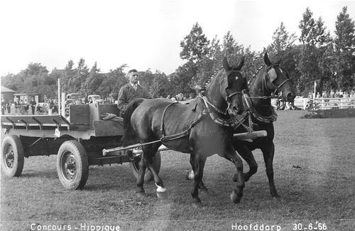 Concours Hippique 1956 Jo de Groot met Boerenwagen