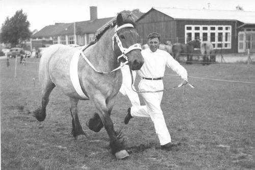 Concours Hippique 1960 bij Kleuterschool en MULO