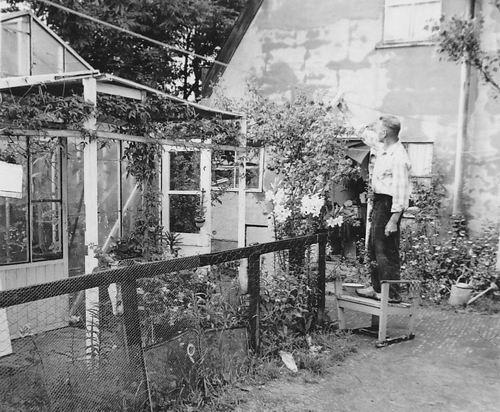 Es Teun v 1960 in Achtertuin met Rozen