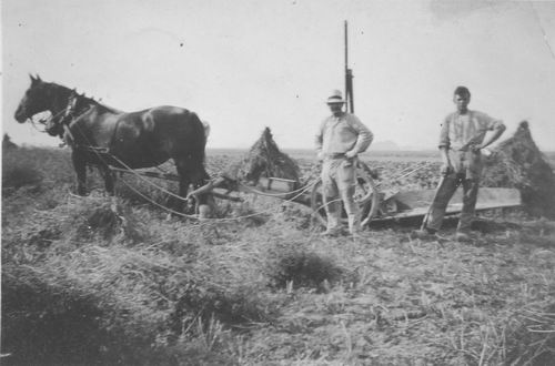 Geertzema Galtjo J J 1911 193_ bij Karwij-oogst