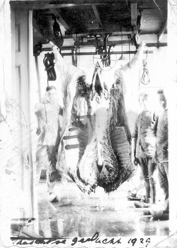 <b>ZOEKPLAATJE:</b>Groef vd Onbekend 1929 Paasos Geslacht 0013