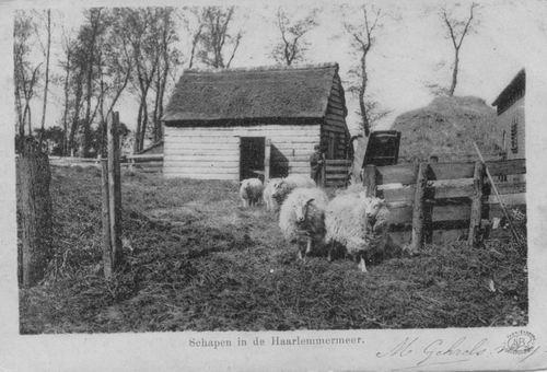Hmeer Schapen 1902
