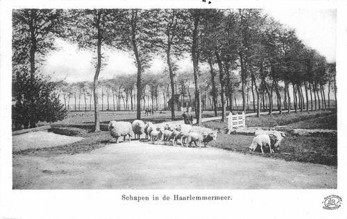 Hmeer Schapen 1902 01