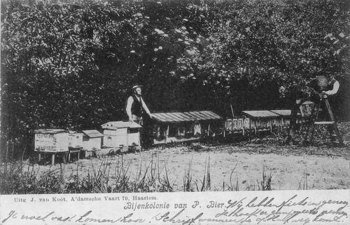 Hoofdweg O 0152 1907 Bijenkolonie v Pieter Bier