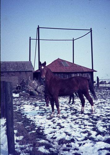 Hoofdweg O 0900 197_ Paard in de Sneeuw 02