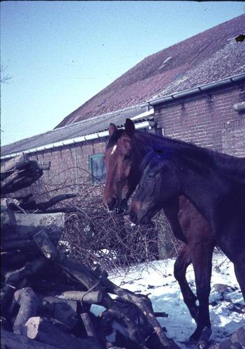Hoofdweg O 0900 197_ Paard in de Sneeuw 04