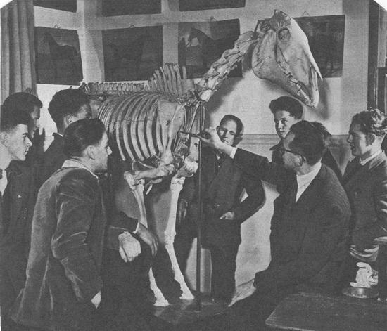 Hoofdweg W 0695 Hooijberg Z 1953 Dierenarts verteld over Anatomie Paard