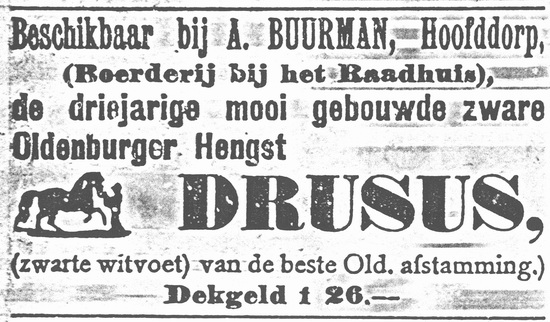 Hoofdweg W 0705 1919 Oldenburger Hengst te koop bij Buurman