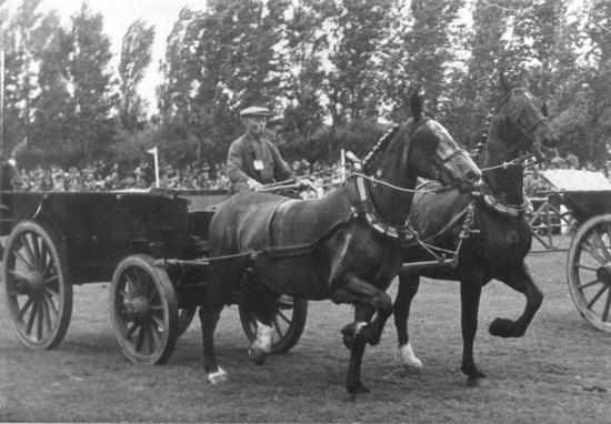 Hoofdweg W 0705 met Calvelage op Concours Hippique 1946_47