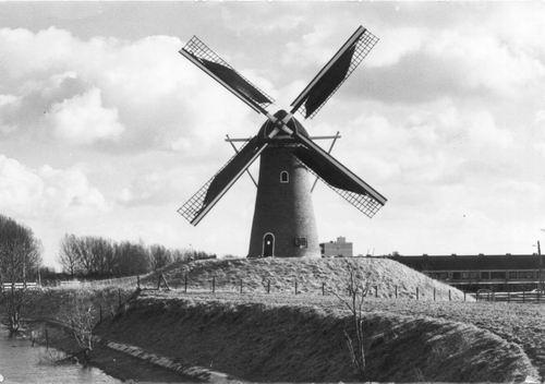 Hoofdweg W 0741 1982 Eersteling