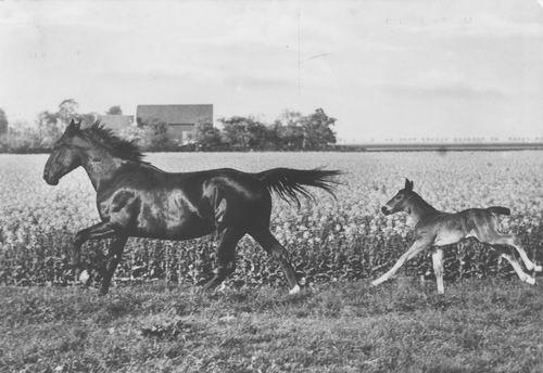 Hoofdweg O 0532 19__ vanaf vd Sluijs met Paard en Veulen