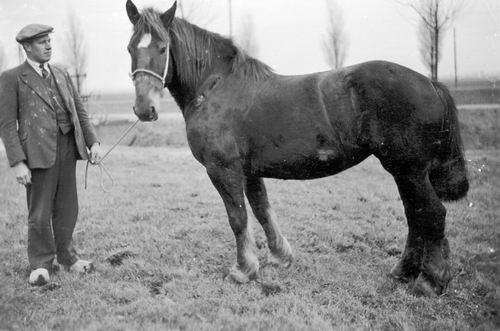 Meijer Jan J 1900 19__ met Paard bij Henricus Hoeve