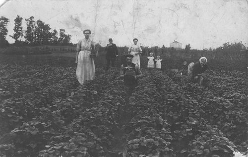 Oever Teunis van den 191_ met fam Aardbeienplukken