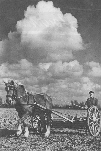 Kunstmest Strooien 1954 met Paard