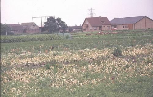<b>ZOEKPLAATJE:</b>&nbsp;Onbekend 1978-80 Boerderij bij Hoogspanningsmasten