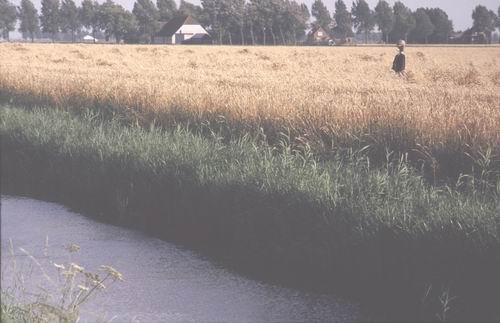 IJweg W 0789 1978-79 gezien vanaf Vijfhuizerweg 02