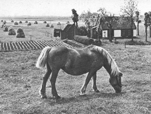 <b>ZOEKPLAATJE:</b>&nbsp;Onbekend Ringdijk Huis in de Laagte 1955