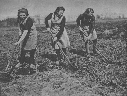 <b>ZOEKPLAATJE:</b>Onbekend Landbouw 3 dames in t Land 194104
