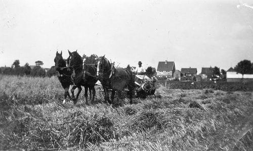 <b>ZOEKPLAATJE:</b>&nbsp;Onbekend Landbouwwerkzaamheden bij Alders 01