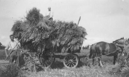 <b>ZOEKPLAATJE:</b>&nbsp;Onbekend Landbouwwerkzaamheden bij Alders 02