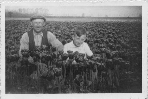 Limpt Gradus B v 194_ met zoon Henk in Tulpenveld
