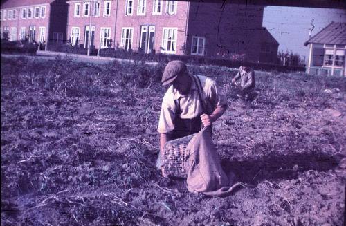 <b>ZOEKPLAATJE:</b>Prinses Beatrixplantsoen 1949-50 Aardappellen Rapen 01_Exp