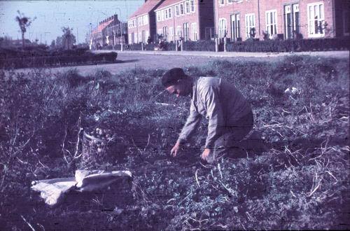 <b>ZOEKPLAATJE:</b>Prinses Beatrixplantsoen 1949-50 Aardappellen Rapen 02