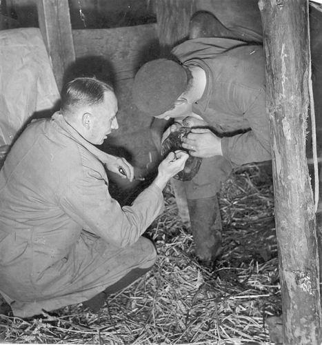 Smit Nicolaas 1914 19__ met Veearts Kat checkt Paardenhoef
