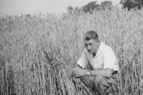 Velt Arie in t 1942 tussen de Tarwe