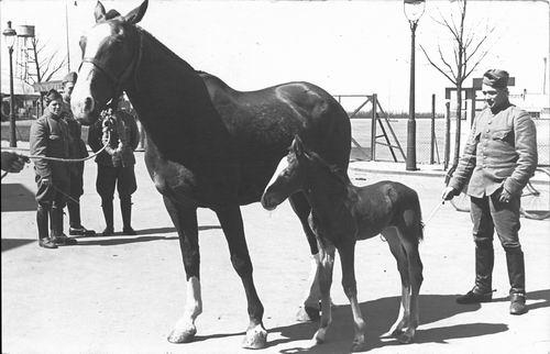 Verzaal Pieter 1913 1940 Soldaat bij Paarden