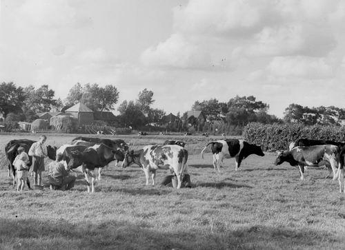 Vijfhuizerdijk 019- Achterzijde en Nic Smit melkt de Koeien