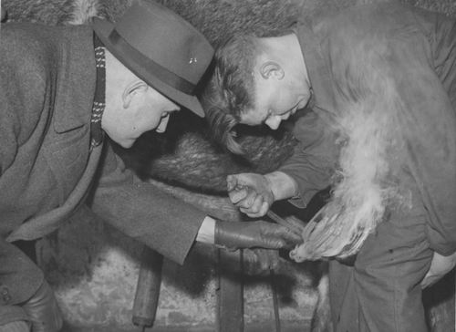 Zuijdam D W 1941-42 Cursus Hoefbeslag 04