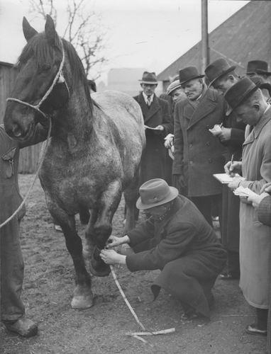 Zuijdam D W 1941-42 Cursus Paardenkennis 06