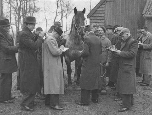Zuijdam D W 1941-42 Cursus Paardenkennis 07