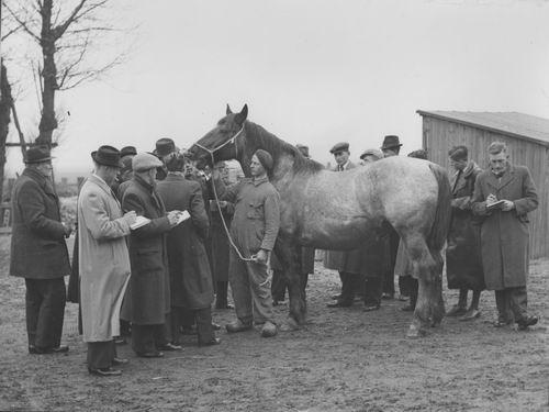 Zuijdam D W 1941-42 Cursus Paardenkennis 08