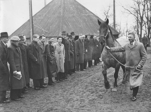 Zuijdam D W 1941-42 Cursus Paardenkennis 09
