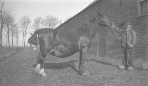 Aalsmeerderweg O 0170 19__ Paard J Colijn met Hernia