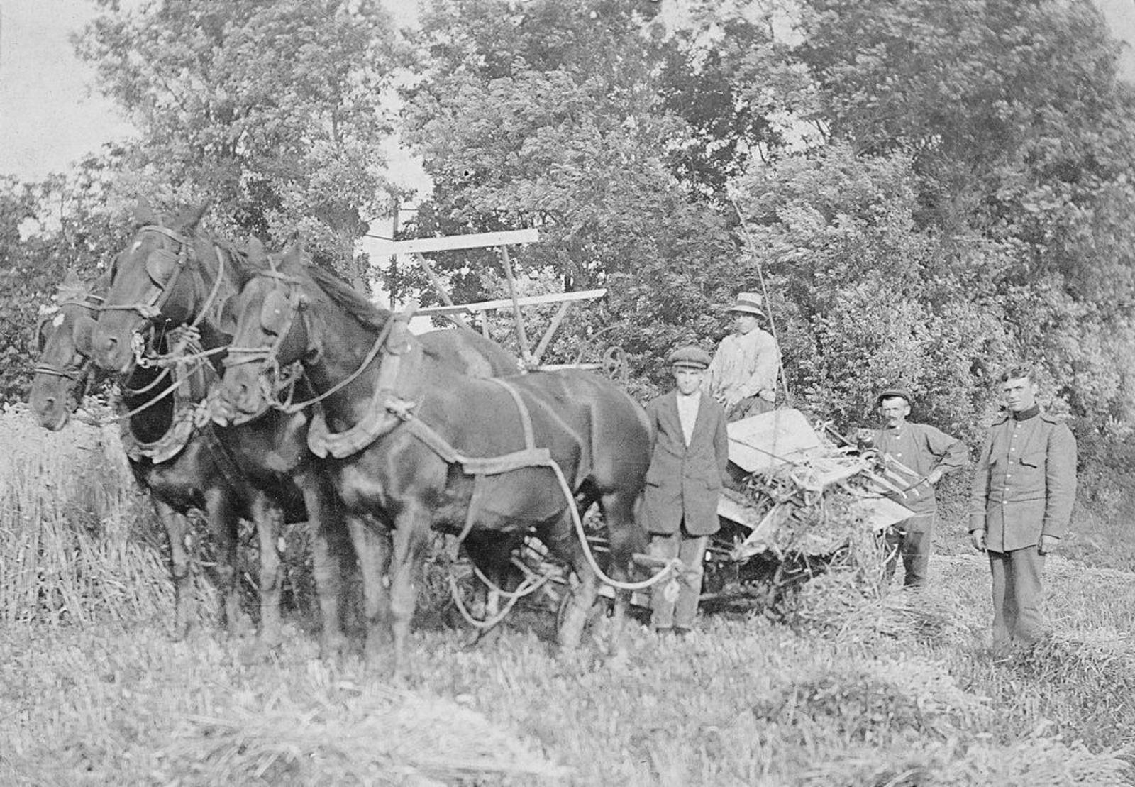 Biesheuvel Huib Pzn 1897 19__ Korenoogst met Barend Dzn den Ouden
