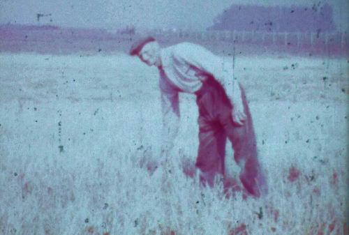 Bos Lange Isaac 1960-63 Boer op Lisserweg 0005 02