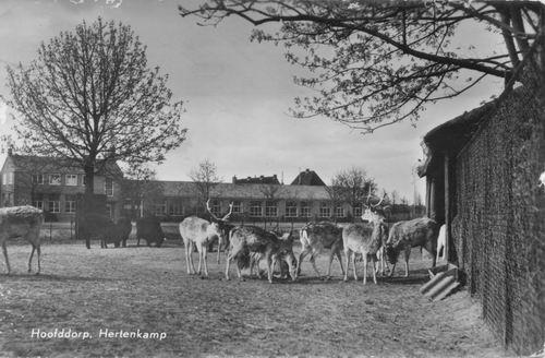 Boslaan Wandelpark 1965 Herten bij Stal